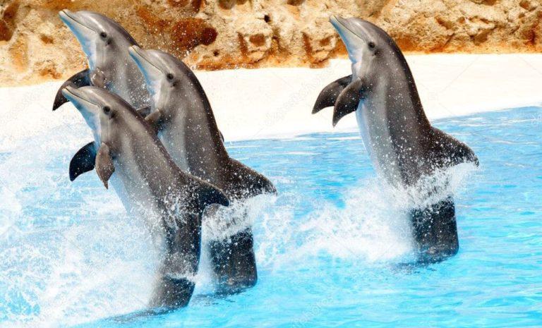Дельфинарий из Сиде