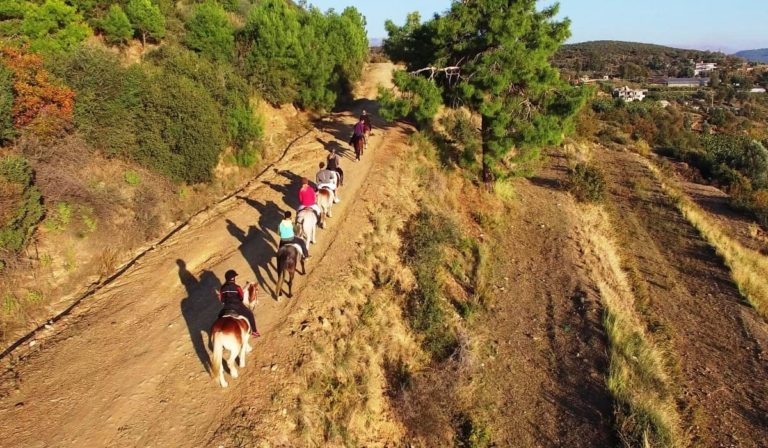 Лошади в Алании