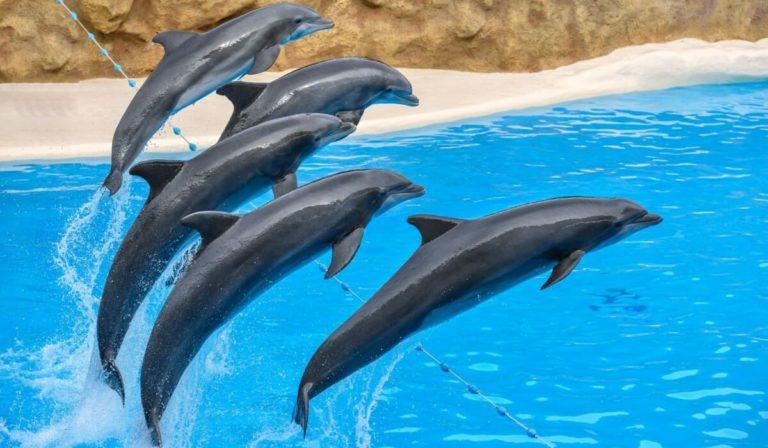 Дельфинарий из Кемера